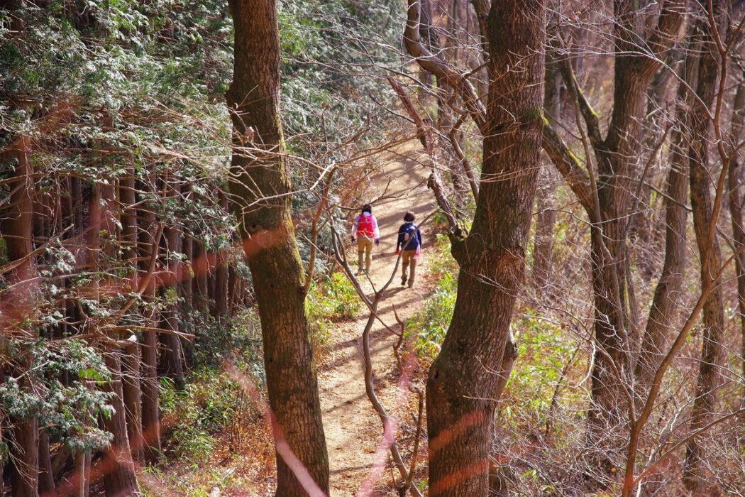 テーマで歩く山の旅 #15 裏高尾の定番トレイルで低山縦走