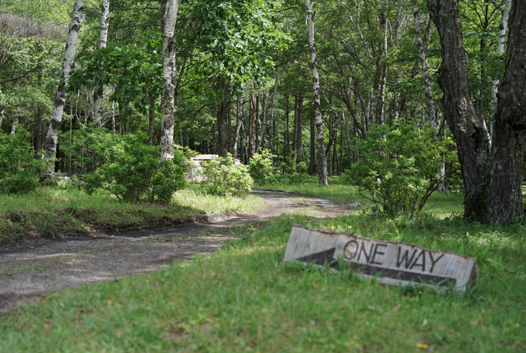 静かにのんびり過ごせる白樺の森 姫木平ホワイトバーチキャンプフィールド