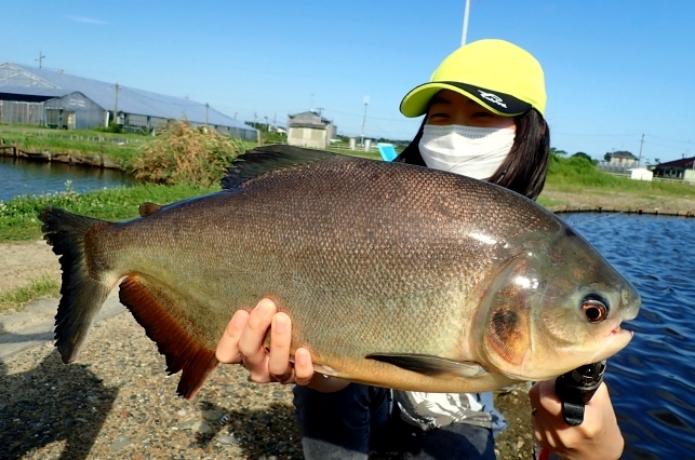 【浜名湖フィッシングリゾート】釣り経験なくともアマゾンの怪魚・コロソマが超簡単に釣れちゃうんです