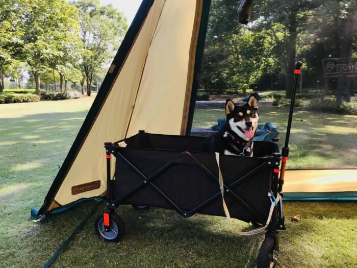 愛犬と夏キャンプ!安全・快適に過ごすためのポイントは?