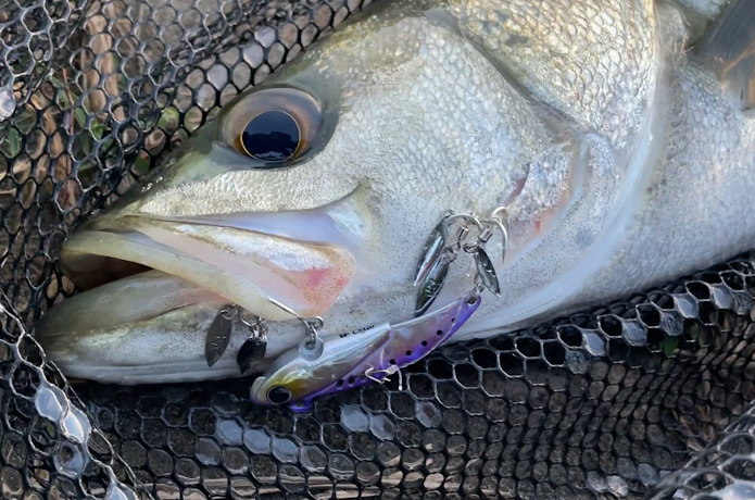【まるで小魚の群れ!?】話題のブレード6個ルアー『キャシーマージー』を実釣インプレ!