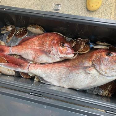 鯛と言ったら「真鯛」旬の時期や釣り方、おすすめの調理方法・レシピを紹介!