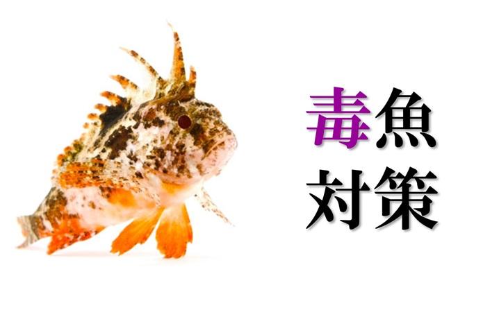 知らないとヤバい!?『釣れがちな毒魚』の対処方と刺された時の注意点をマスター