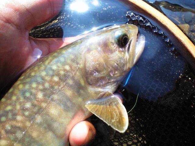 イワナ釣りの始め方!釣れるシーズンから仕掛けで揃える道具、釣り方を解説!