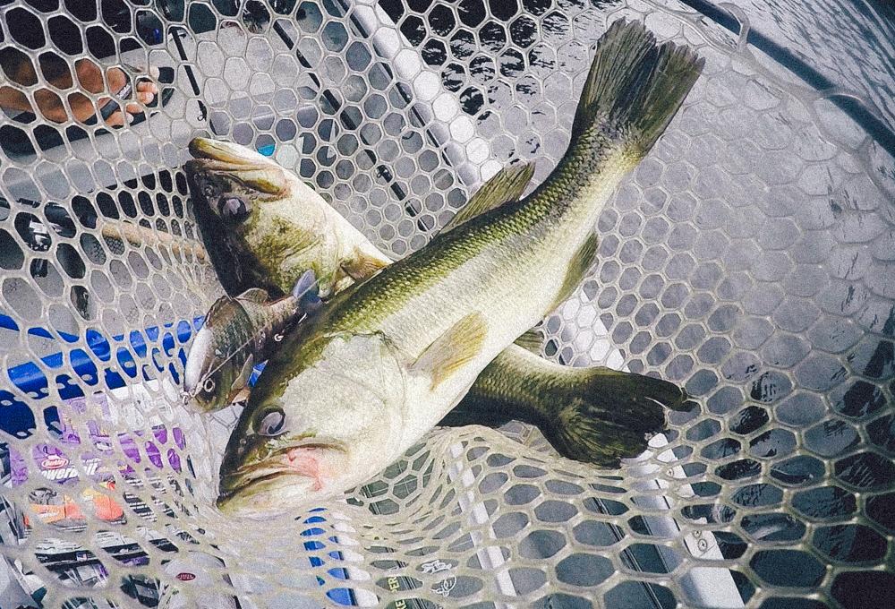 【豊英でエイトトラップ】ハザーと釣りにいったらブルシューターJr.で45cmがダブルヒットした
