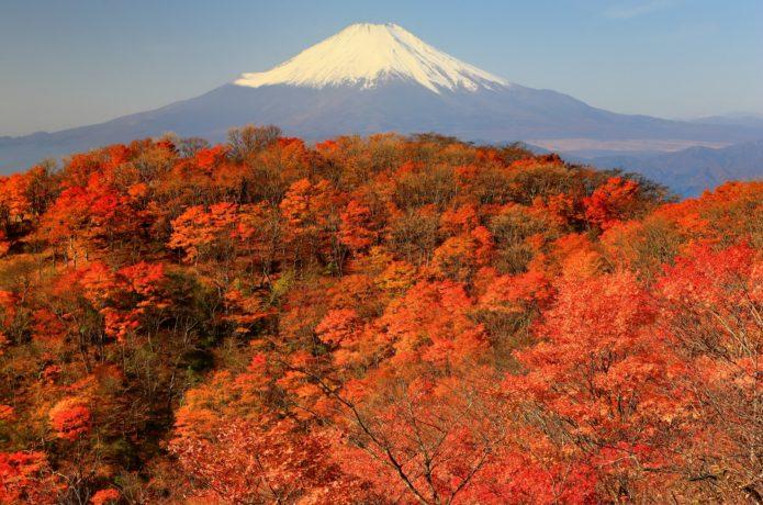 神奈川県で紅葉を楽しむなら丹沢!おすすめスポットと登山情報