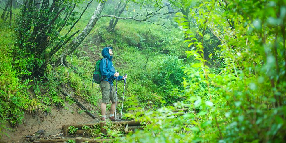 フィールドレポート  ブナ林を見に丹沢へ(1)【アンバサダー 谷口京】