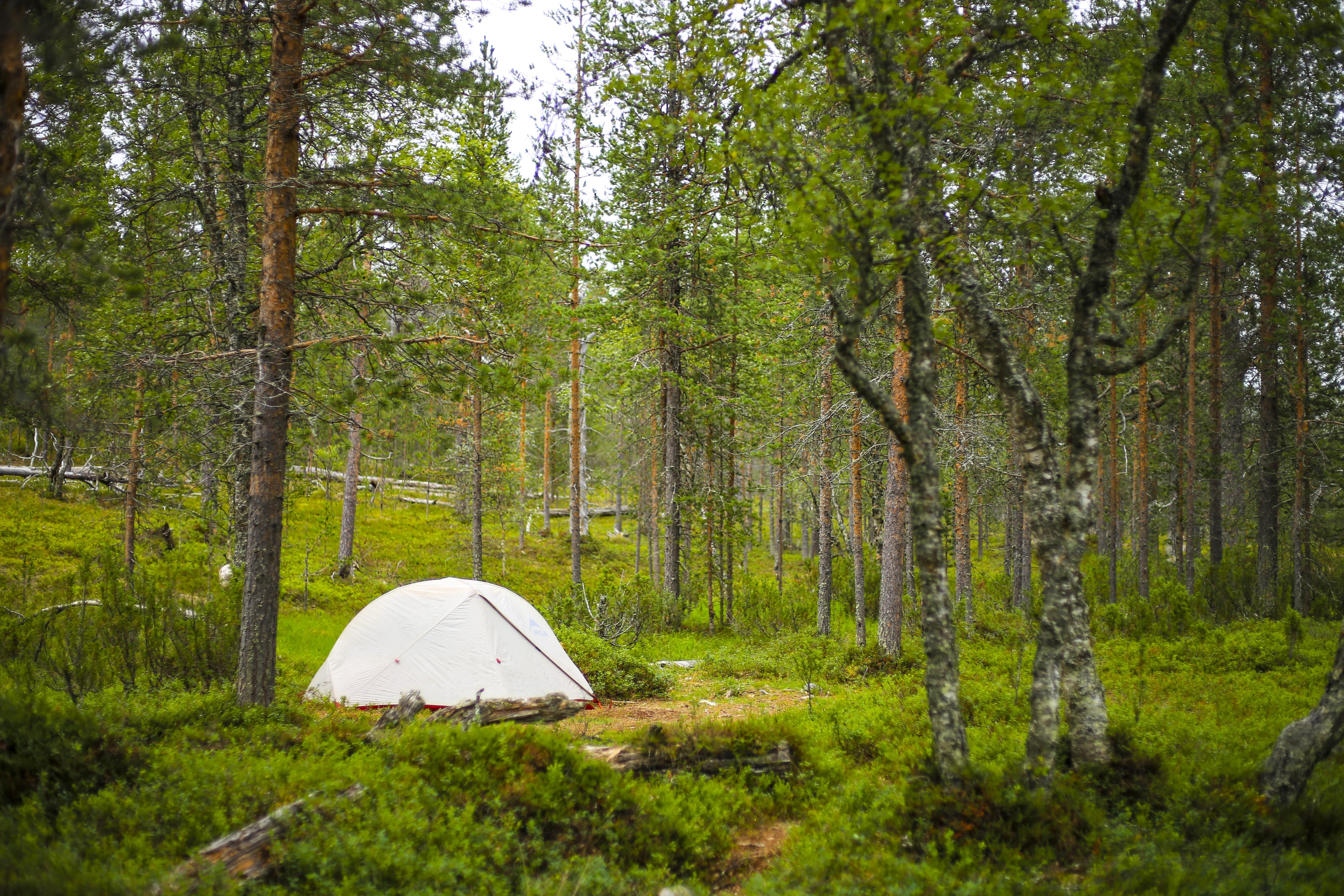 そこにキャンプ愛はあるのか。