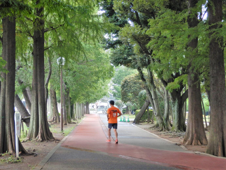 ランナーが集まる別所沼公園を走る。さいたま市のランニングステーション「別所沼会館」と周辺コース