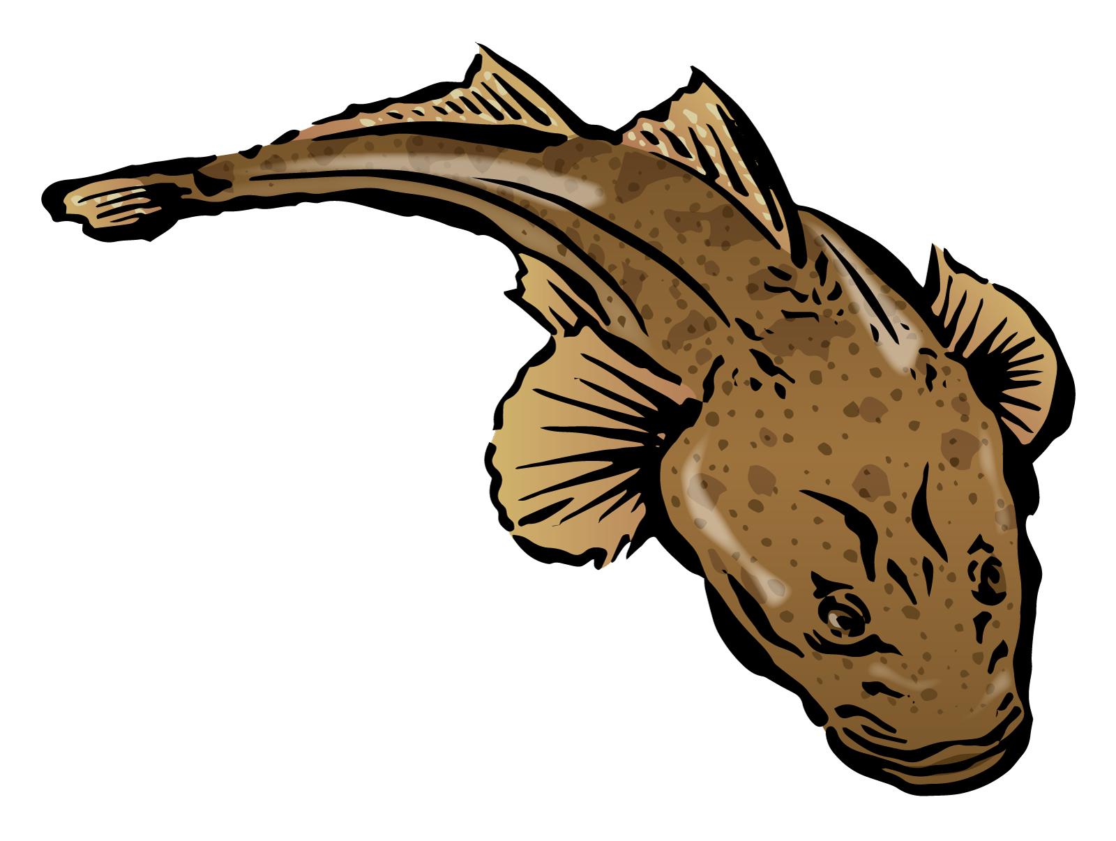 ワニゴチとは?旬な時期に食べたい美味しい魚の正体や食べ方をご紹介!