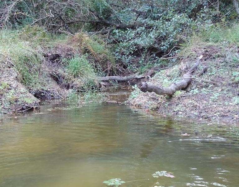 池や湖でよく見かけるインレットはどうやって攻めればいいの?先行者と出くわしてしまったらあきらめるしかない?
