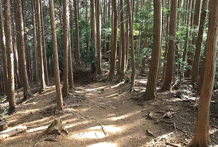 コレ知ってる?気にしてみると面白い登山道のヒミツ!