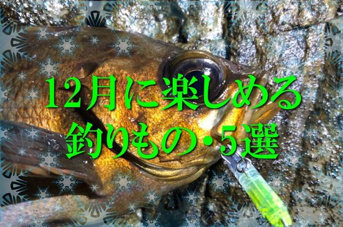 釣り人に冬休みなし!?【海釣り】12月に釣れるおすすめの魚・5選