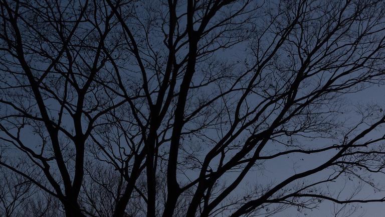 暗闇で非日常体験!裏山でビバークしてみよう
