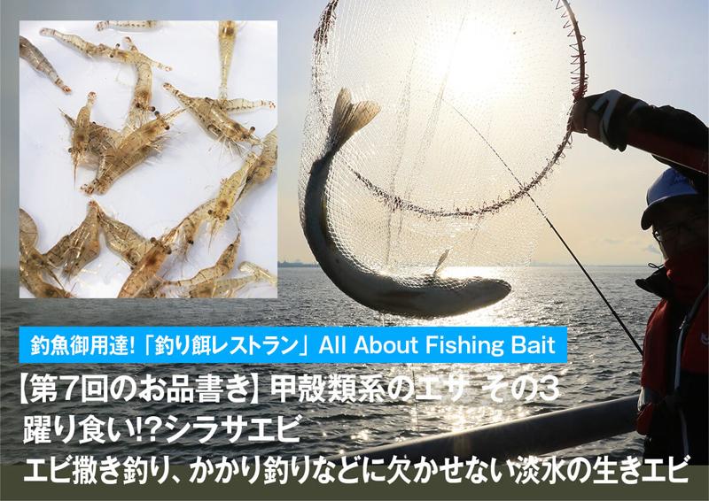 躍り食い!?シラサエビ エビ撒き釣り、かかり釣りなどに欠かせない淡水の生きエビ