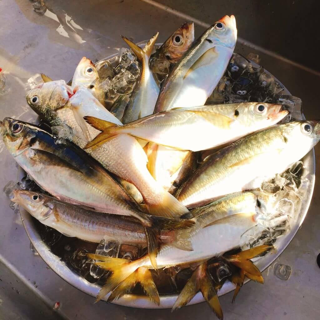 釣った魚の氷締めのやり方と持ち帰り方法