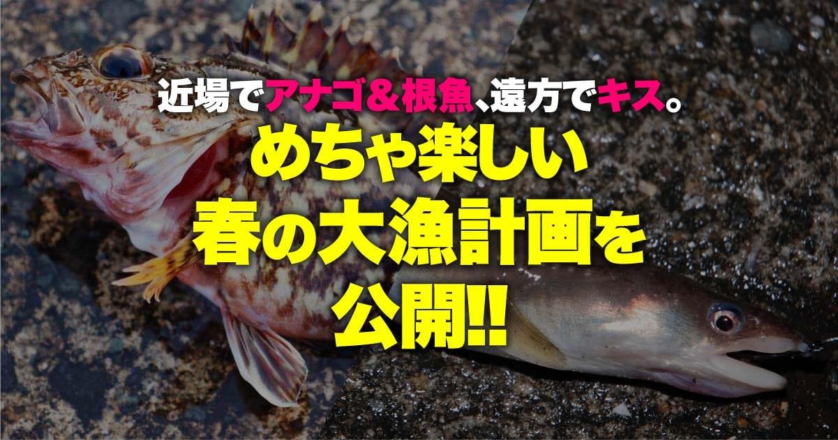 近場でアナゴ&根魚、遠方でキス。メチャ楽しい春の大漁計画を公開!!