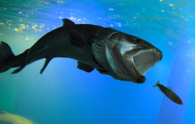 エサの食べ方の違いを魚種別に徹底解説!この違いを知っていれば、釣り方のヒントになること間違いなし!