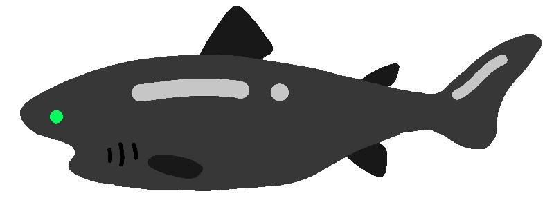 カグラザメとは?深海に生息する凶暴すぎるサメの生態や特徴を解説!