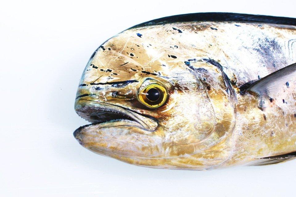 ハワイアンのマヒマヒって実は日本のあのお魚だった!?その意外な由来や語源とは…