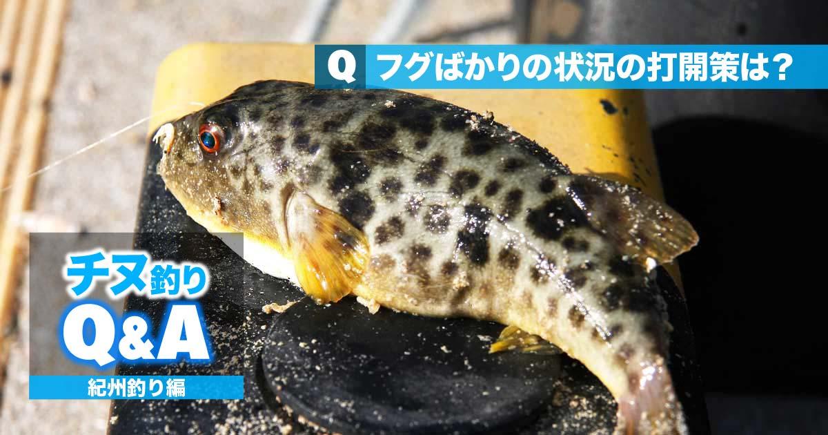 チヌ・紀州釣りの悩みを解決!!|フグばかりの状況の打開策は?