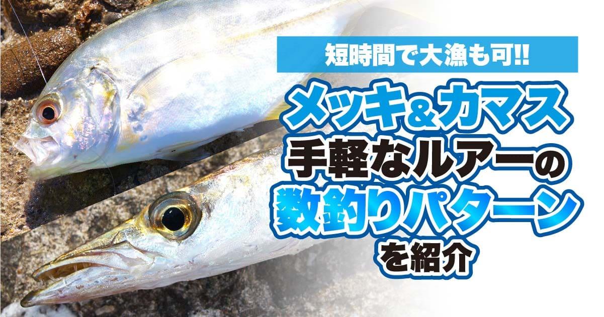 短時間で大漁も可!! メッキ&カマスの手軽なルアーの数釣りパターンを紹介