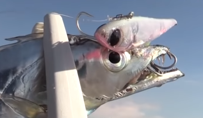 タチウオの釣れる時期っていつ?ショアから狙えるおすすめタチウオルアー特集