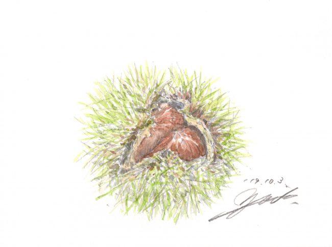 筆とまなざし#149「食材として。絵のモチーフとして。親しみ深い秋の味覚」
