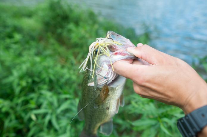 ソルトでも活躍。ぼくが愛してやまないスピナーベイト「ハイピッチャー」ってホントよく釣れる。