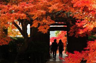 絶景紅葉スポットで秋を満喫♪~九州・四国編~