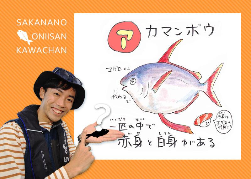 あ・い・う・え・おさかな 【ア行】のお魚な~に?