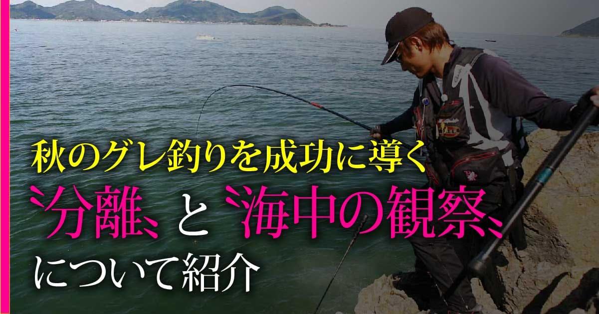 秋のグレ釣りを成功に導く〝分離〟と〝海中の観察〟について紹介