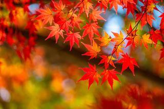 赤・橙・黄色が織りなす絶景!北陸の紅葉スポット4選