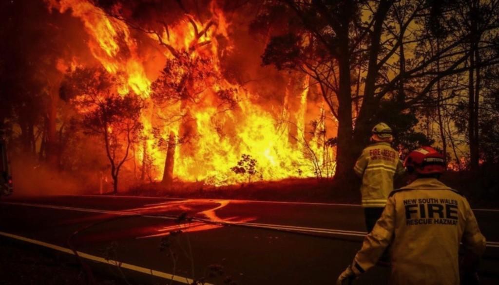 オーストラリアの山火事で700万haが焼失し8千頭のコアラも犠牲に!広がる支援の輪