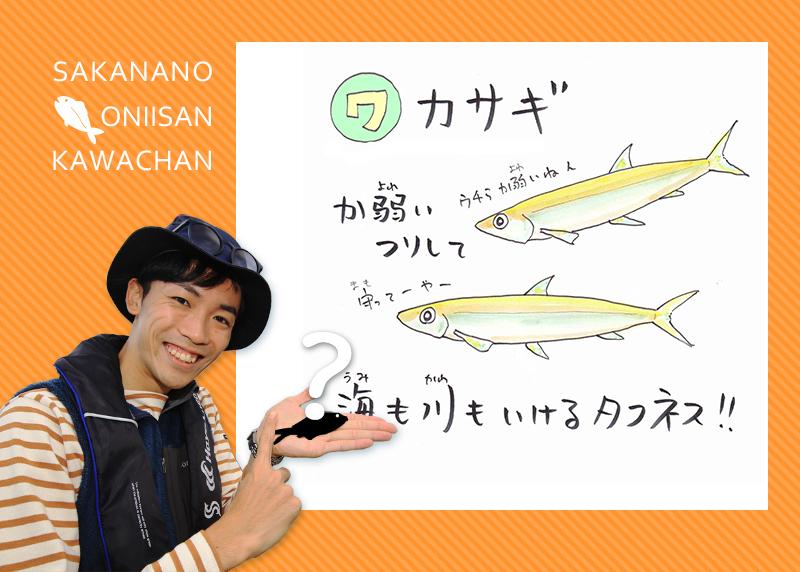 あ・い・う・え・おさかな 【ワ行】のお魚な~に?