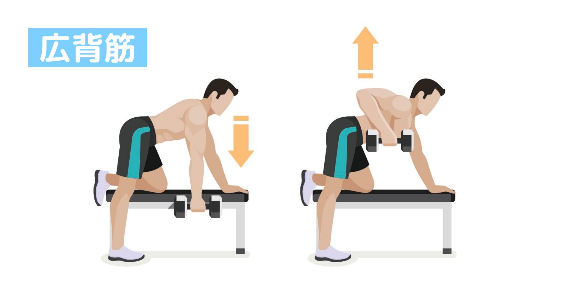 背中の筋肉「広背筋」の鍛え方。おすすめ筋トレメニューと効果を高めるポイント