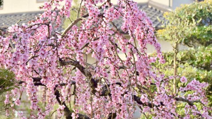横浜赤レンガ倉庫でお花見!「七つの文様を奏でる庭 〜FLOWER GARDEN 2020(フラワーガーデン 2020)〜」開催
