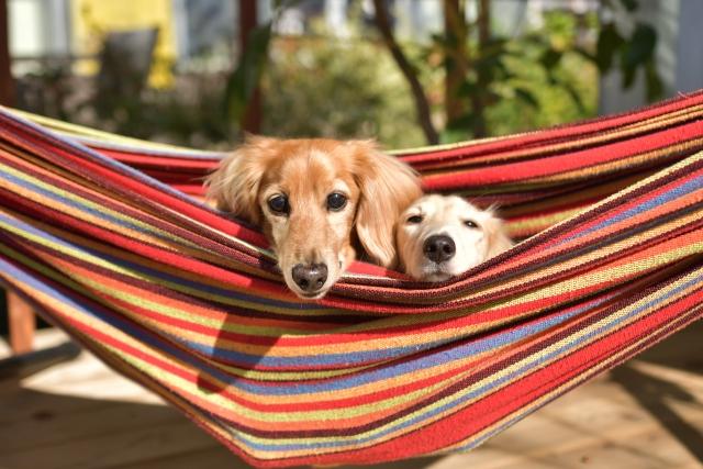 キャンプに犬を連れていきたい!ペット可キャンプ場選びのポイント