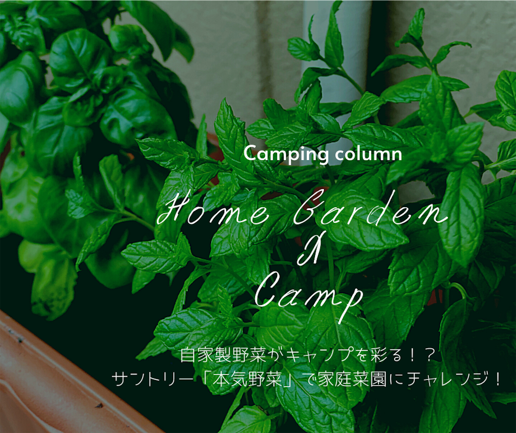 自家製野菜がキャンプを彩る!?サントリー「本気野菜」で家庭菜園にチャレンジしてみよう!