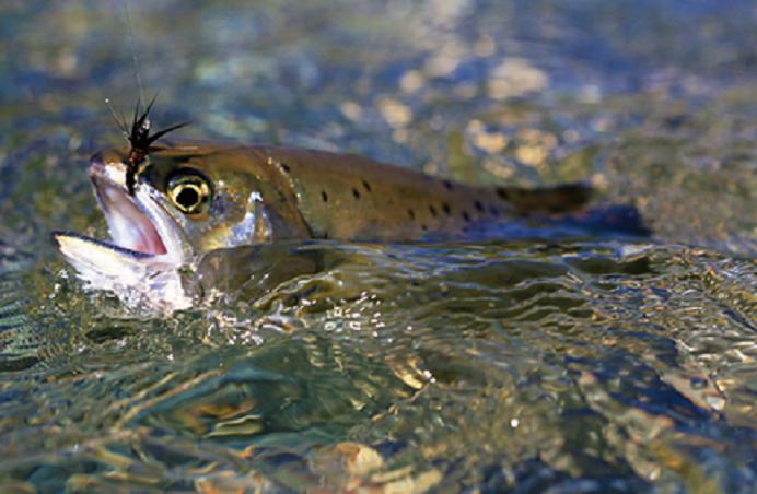 渓流釣りってどうすればいいの?初心者におすすめの装備や竿を徹底チェック