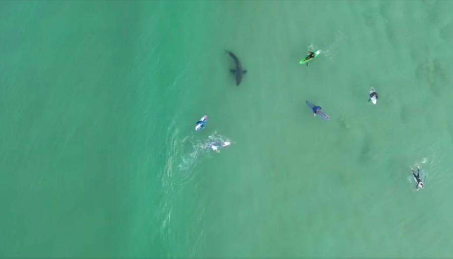 サーフィンに夢中で真下を泳ぐ巨大ホオジロザメの存在に気付かないサーファー達!南アフリカ ドローン映像