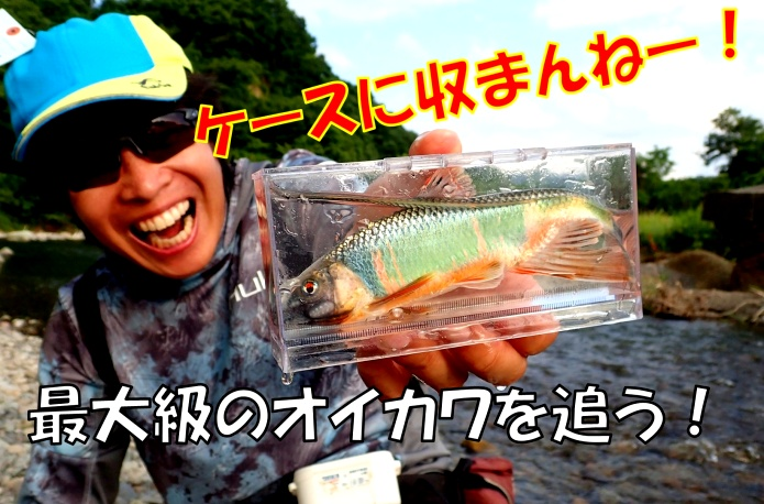 オイカワの最大サイズを追い求めて……夏に美しい雑魚(ザコ)を釣り狙う!出るか?18㎝オーバー