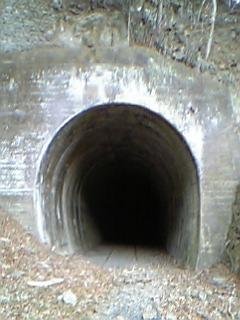 【釣り場の怖い話】トンネル |Mr Tさんの話