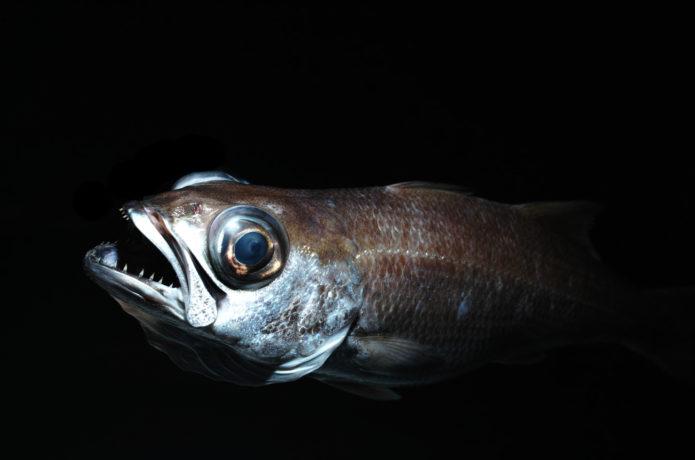 美味魚『ムツ』について。種類ごとの特徴と食べ方、釣り方のコツのまとめ