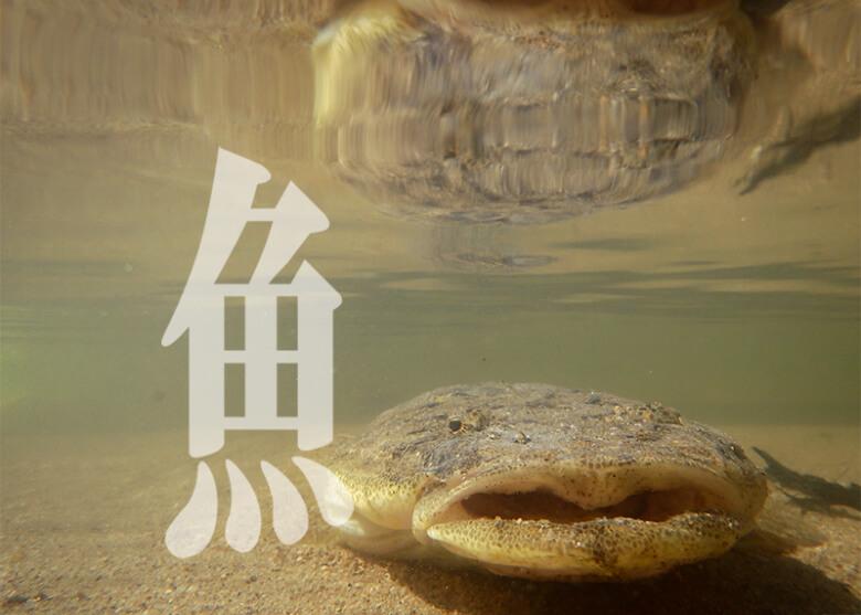 知って得する!魚へんの漢字 夏が旬の魚にまつわる漢字トリビア