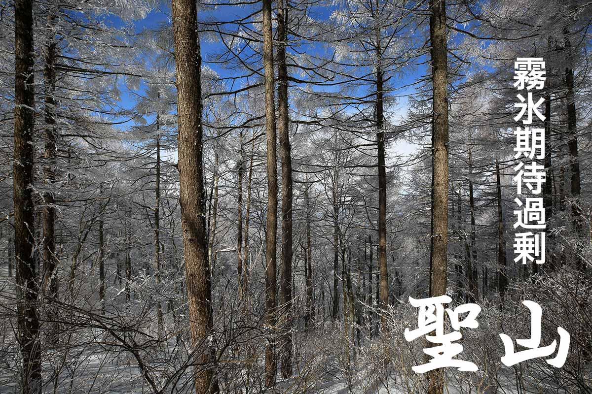 霧氷の煌めく信州聖山