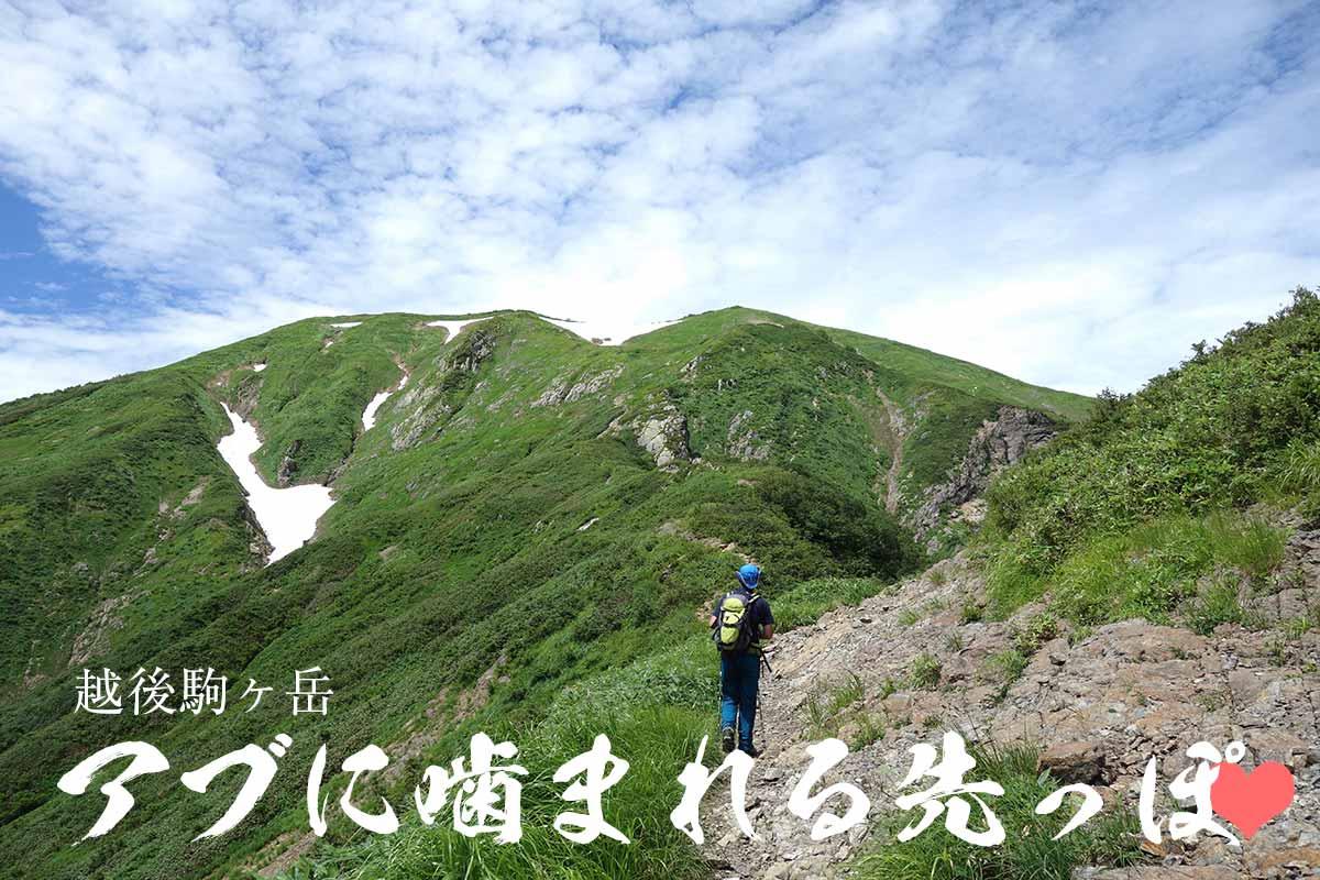 アブがやってくる越後駒ヶ岳