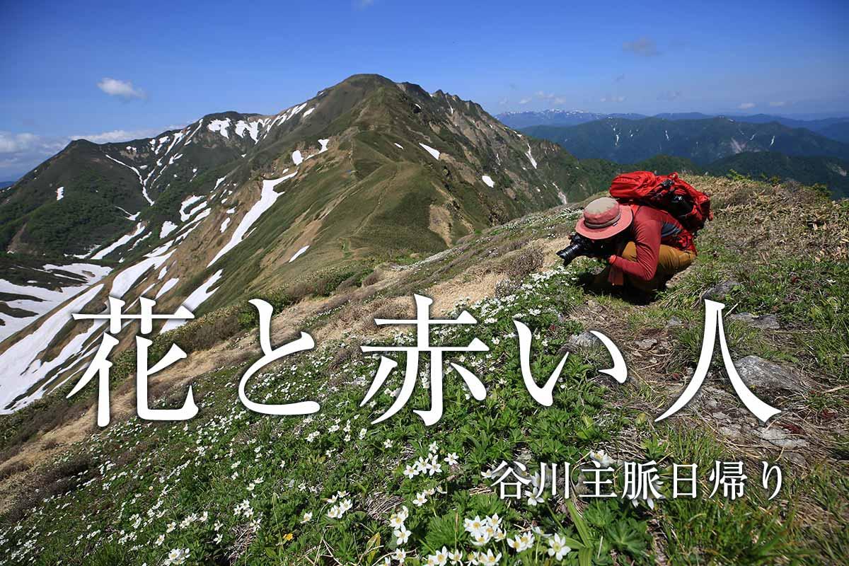 花の最盛期の谷川岳 日帰り主脈