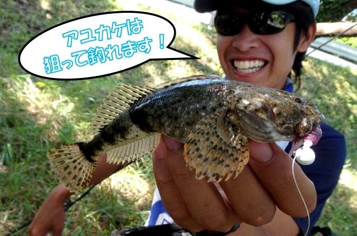 アユカケ(カマキリ)は鮎を引っかけて食べる?!清流のフィッシュイーターに釣り迫ってみた