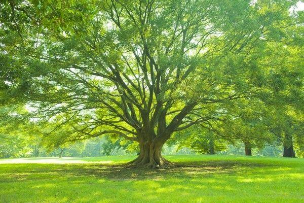 樹木葬とは?流れやトラブル事例、費用など分かりやすく紹介します